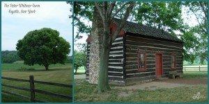Whtimer Farm collage 2